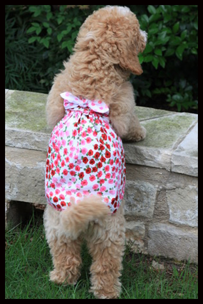 2107f48f70c3 Wholesale designer dog clothes, t-shirts, harness vests & leather ...